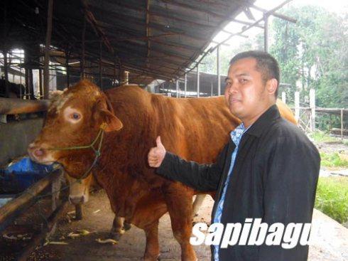 kandang sapi 5
