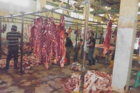 Aktifitas Pemotongan sapi di Rumah Pemotongan Hewan Tapos Depok