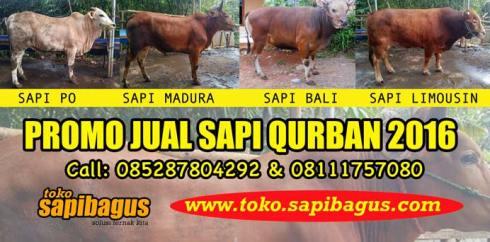 Jual-Sapi-Qurban-2016